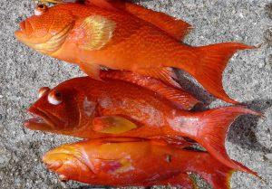 Fish are plentiful